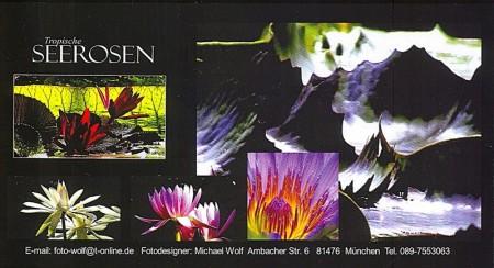 Tropische Seerosen, Pflanze Naturaufnahme Professionell, Fotodesigner Michael Wolf