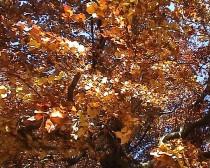 Herbst, Bild Gedicht, Creative Video